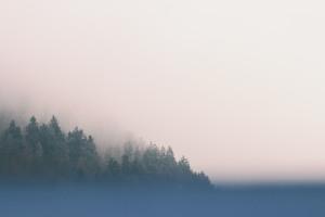 trees-691987_1280